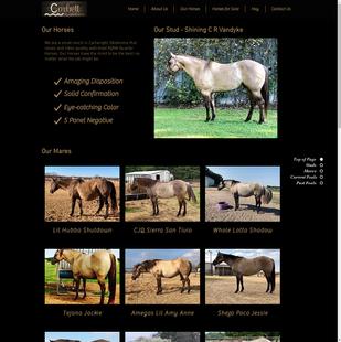 Corbett Creek Ranch - Our Horses