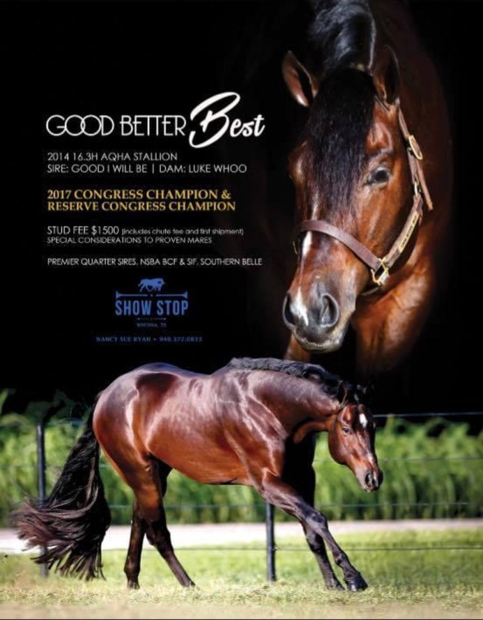 Good Better Best aka Mag who is Tyson's Sire