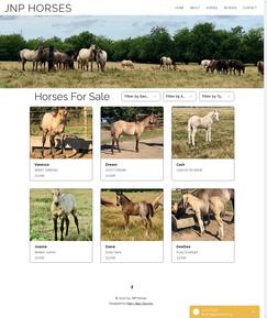 JNP Horses - Horses For Sale