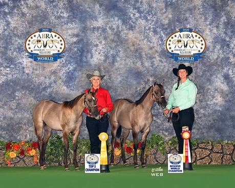 American Buckskin Registry Association (ABRA) World Show