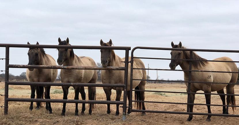 HorseOnFence_edited_edited.jpg