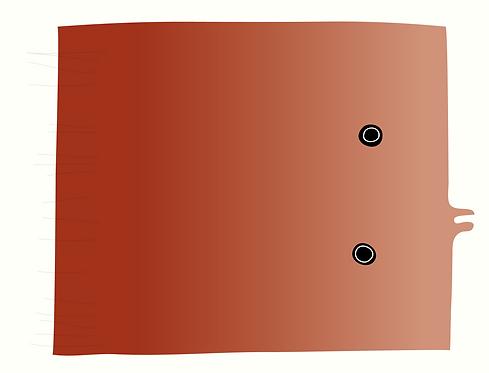 Flounder  AN066