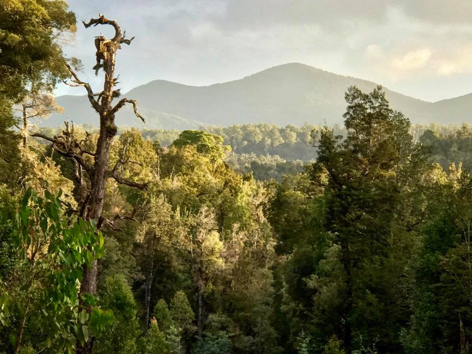 Scene from the Tarkine. Copyright Michael Dempsey