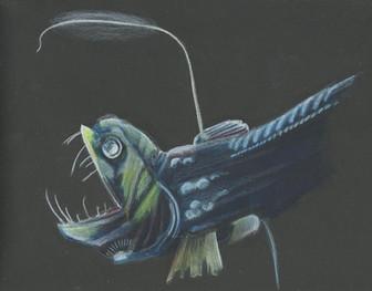 Pacific Viper Fish
