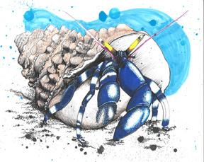 Crabbie Crabbie hermit Crabbie