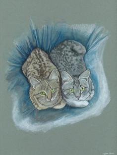 Kitties! (Jimmy's girls)