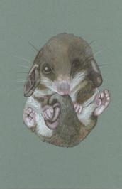 Possum?