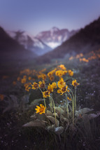 Waterton Flowers