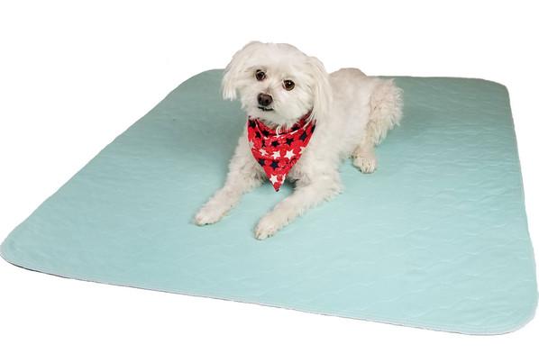 Aqua 34x36 Pad with medium size dog.jpg