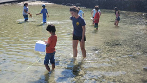 Volcano School Helping Scientists Monitor Coral