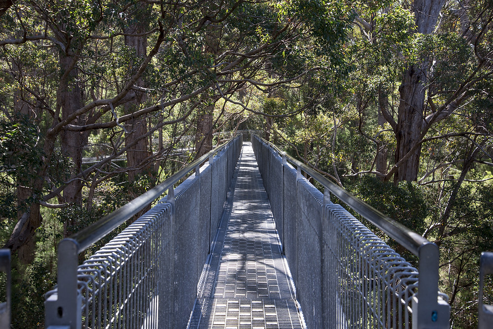 The tree top walk at Walpole's valley of the giants