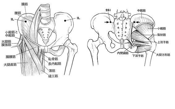 股関節の痛みの原因になる筋肉