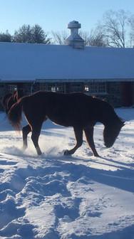 Butterfly Farm - Horse Snow