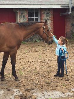 Butterfly Farm - Horse