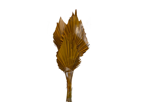 Yellow Palm Spear