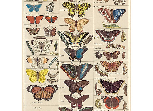 Butterfly Natural Chart Wrap/Poster