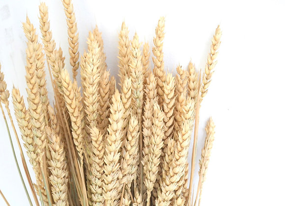 Wheat natural