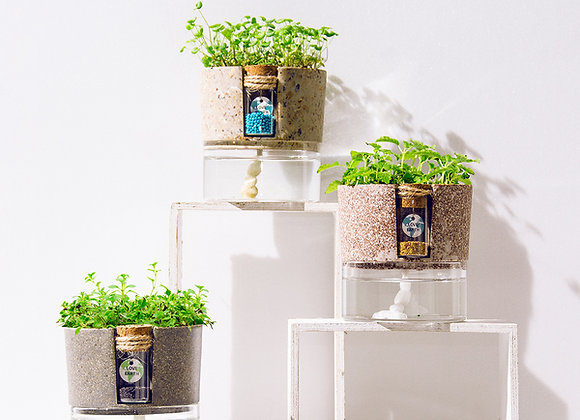 Eco-Friendly Self Watering Planter