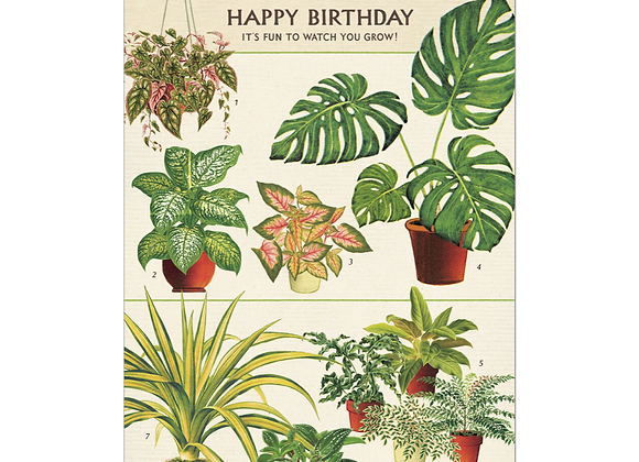 HOUSE PLANTS Greeting Cards