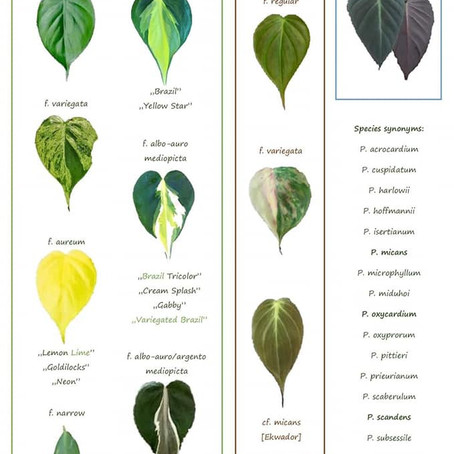 Useful charts for you plant collectors