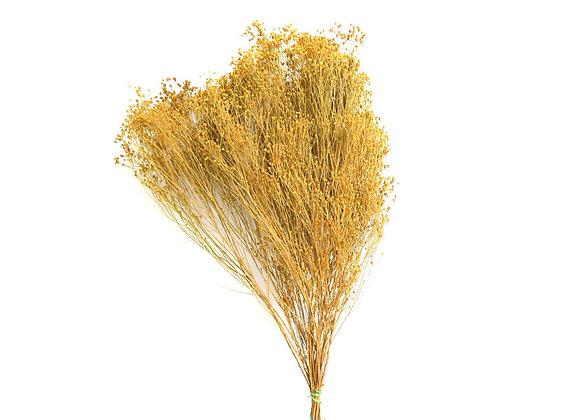 Broom bloom bunch SB bleached yellow