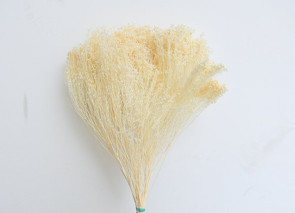 Broom bloom bunch SB bleached white