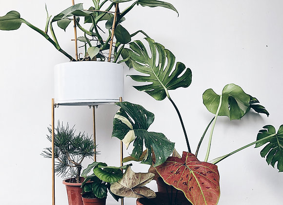 White planter with golden stand (Slim)