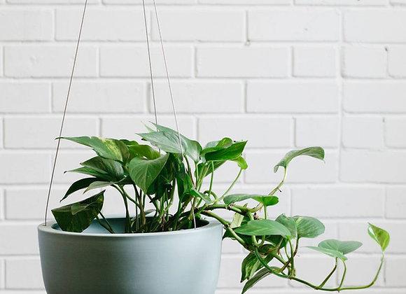 Large Raw Green Hanging Planter