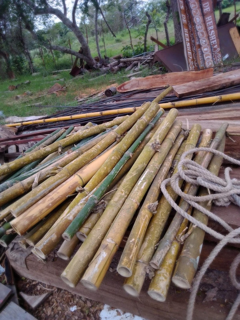 Bambus ohne Ende.jpg