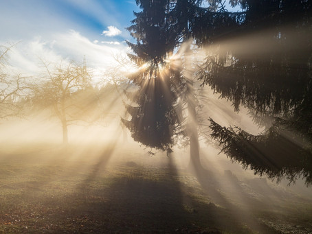 Guest Post by Jen Davis: Coming Out of the COVID Fog