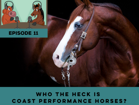 The Cutting Edge, Ep. 11 - Who The Heck Is Coast Performance Horses?!