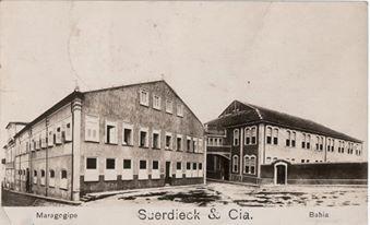Suerdieck - Maragogipe