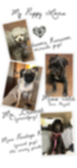 pup collage last one.JPG