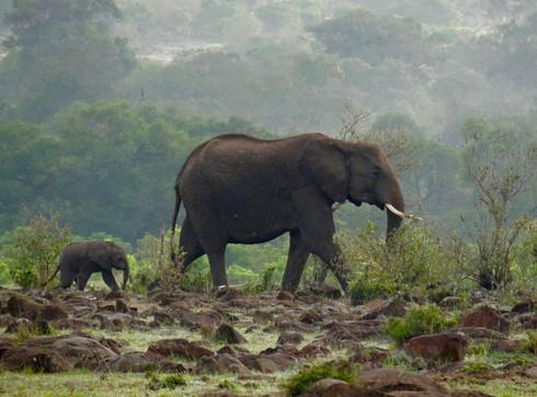 Mother and baby elephant.jpeg