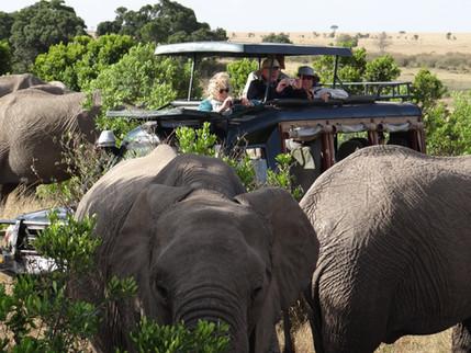 3.Elephants surrounding vehicle on safari in the conservancy in Maasai Mara. Marcia Moore