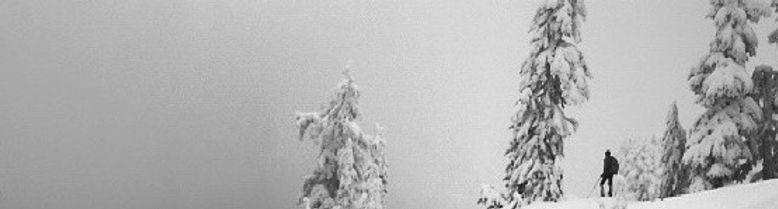 Revelstoke Tree skiing