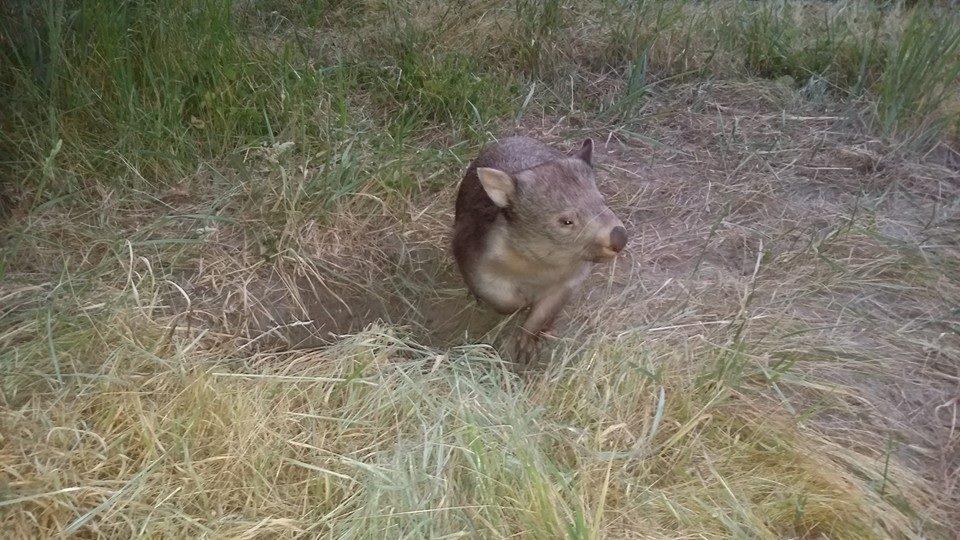 Tilly burrow