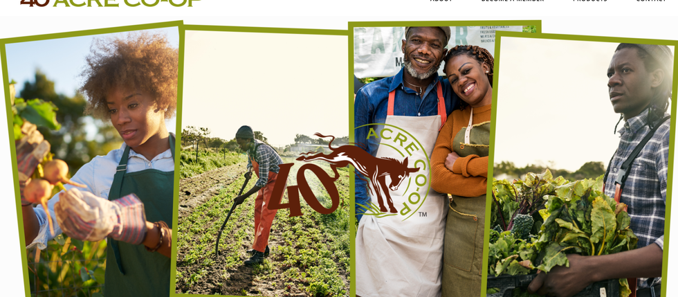 A Co-op for Black farmers is thriving in Northern Minnesota