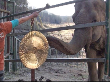 THE ELEPHANT SANCTUARY IN TENNESSEE recipient of our first charity give away