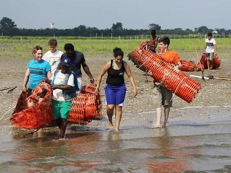 Restore America's Estuaries - Q4 Winners!