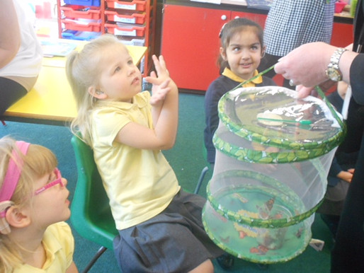 The Foundation caterpillars have become beautiful butterflies. Today we let them fly away!