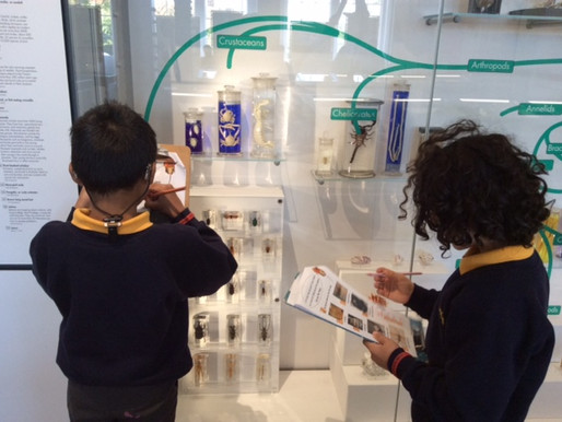 Y4 Penguins visited Birmingham University's Lapworth Museum of Gelology to support their learning