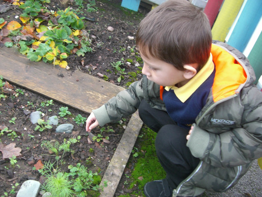 Foundation (Lily Class) have been exploring the outside environment to see what mini-beasts we can f