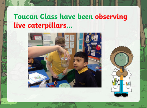 Toucan Class have been observing  live caterpillars…