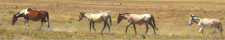Horses plain strip.png