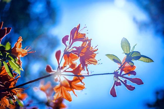 Orange%20Blossom_edited.jpg