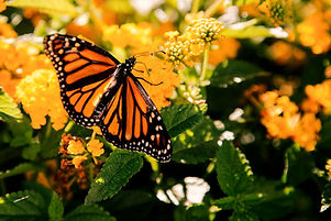 Spent%20a%20good%20twenty%20minutes%20dancing%20with%20these%20butterflies%2C%20following%20them%20t