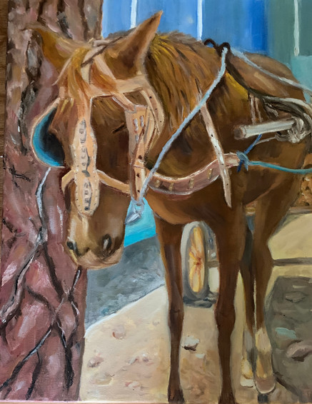 Trinidad Horse.