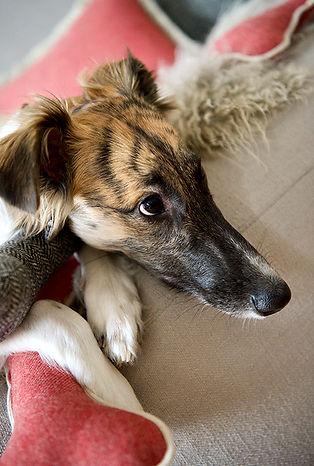 top dog cool cat, tdcc, Kissen, Pölster, Spielknochen für Hunde,