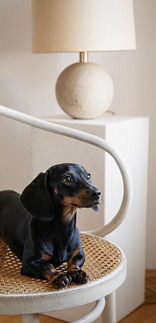 tdcc-dog-chair.jpg